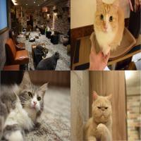 猫 カ フ ェ キ ャ リ コ 吉祥寺 店