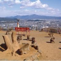 嵐山モンキーパークいわたやま / Arashiyama Monkey Park Iwata Yamaha