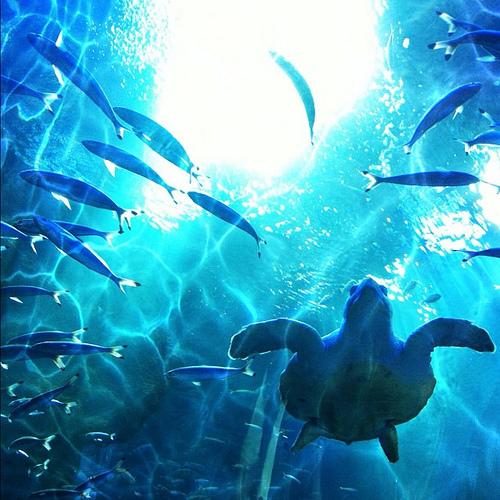 京都水族館 / Kyoto Aquarium
