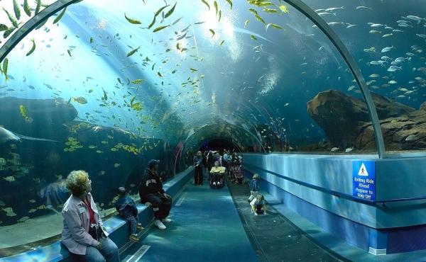 مدينة نيجاتا للأحياء المائية Marinepia Nihonkai / 新潟 市 水族館 水族館 マ リ ピ ア 日本海