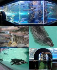 Uozu Aquarium / 魚津 魚津
