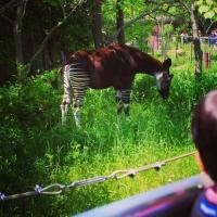 よこはま動物園ズーラシア / Yokohama Zoo Zoorasia