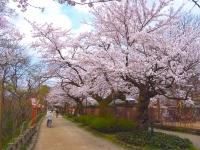 Công viên Takaokakojo / 高 岡 古城