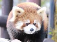 Акита Городской Зоопарк Оморияма ~ Акигин Оморинский Лес ~ / 秋田 市 大 大 大 ~ あ