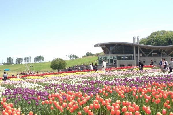 Парк Kokuei Echigokyuryo / 国 営 越 後 丘陵 公園