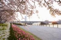 Área verde de Yasuragi Tsutsumi do rio Shinano / 信 濃 川 や す ら ぎ 緑地