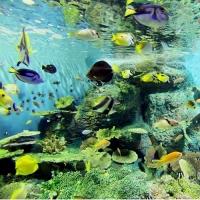 しながわ水族館 / Shinagawa Aquarium