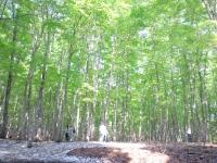 Bosque de belleza / 美人 林