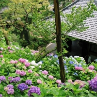 長谷寺 / Der Hase-dera