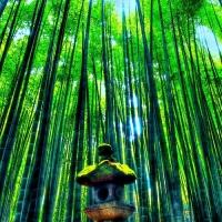 報国寺 / Hokoku-ji