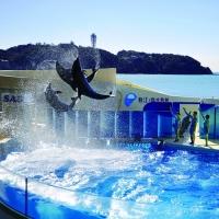 新江ノ島水族館 / Enoshima Aquarium