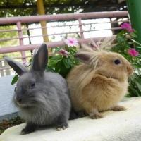 橋区立こども動物園 / Itabashi Children's Zoo