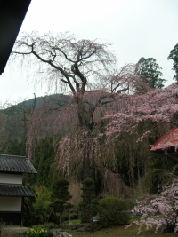 Chomyoji /長妙寺